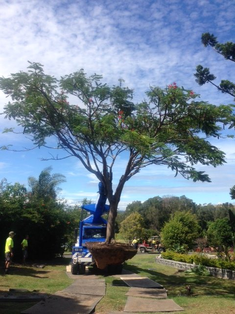 Delivering Poinciana February 2014
