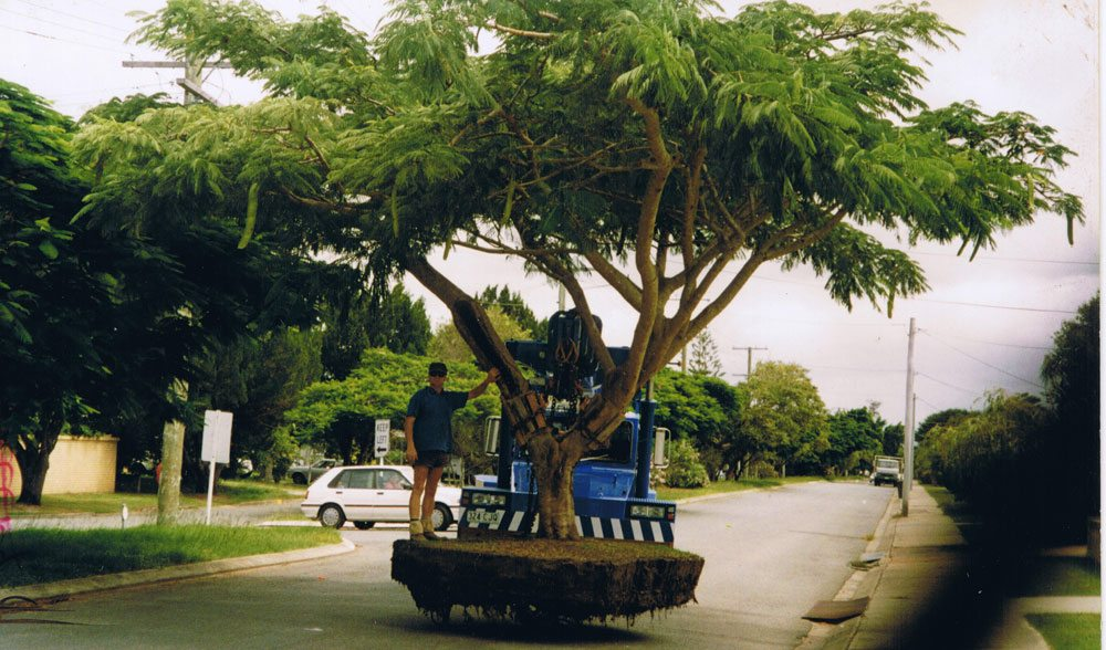 Transplanting Large Poinciana Savoy St, Florida Gardens circa early 1980s
