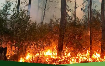Get Ready for Bushfire Season