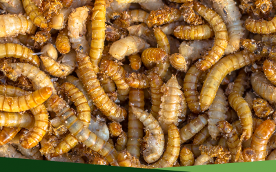 How to Eliminate Borers