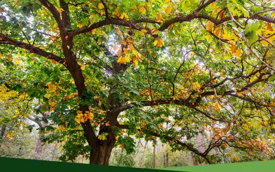 Professional Tree Services 101: What is crown thinning?