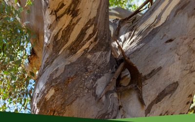 Professional Tree Services 101: What is dead wooding?